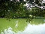 вода правдо не очень чистая,но на фотографие красиво смотрится...)